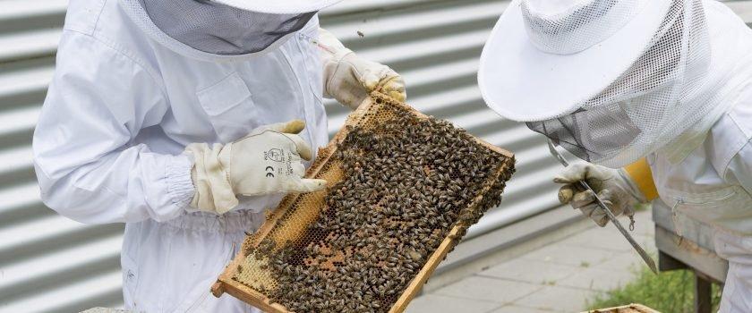 Programs Seek To Get Veterans Into Beekeeping