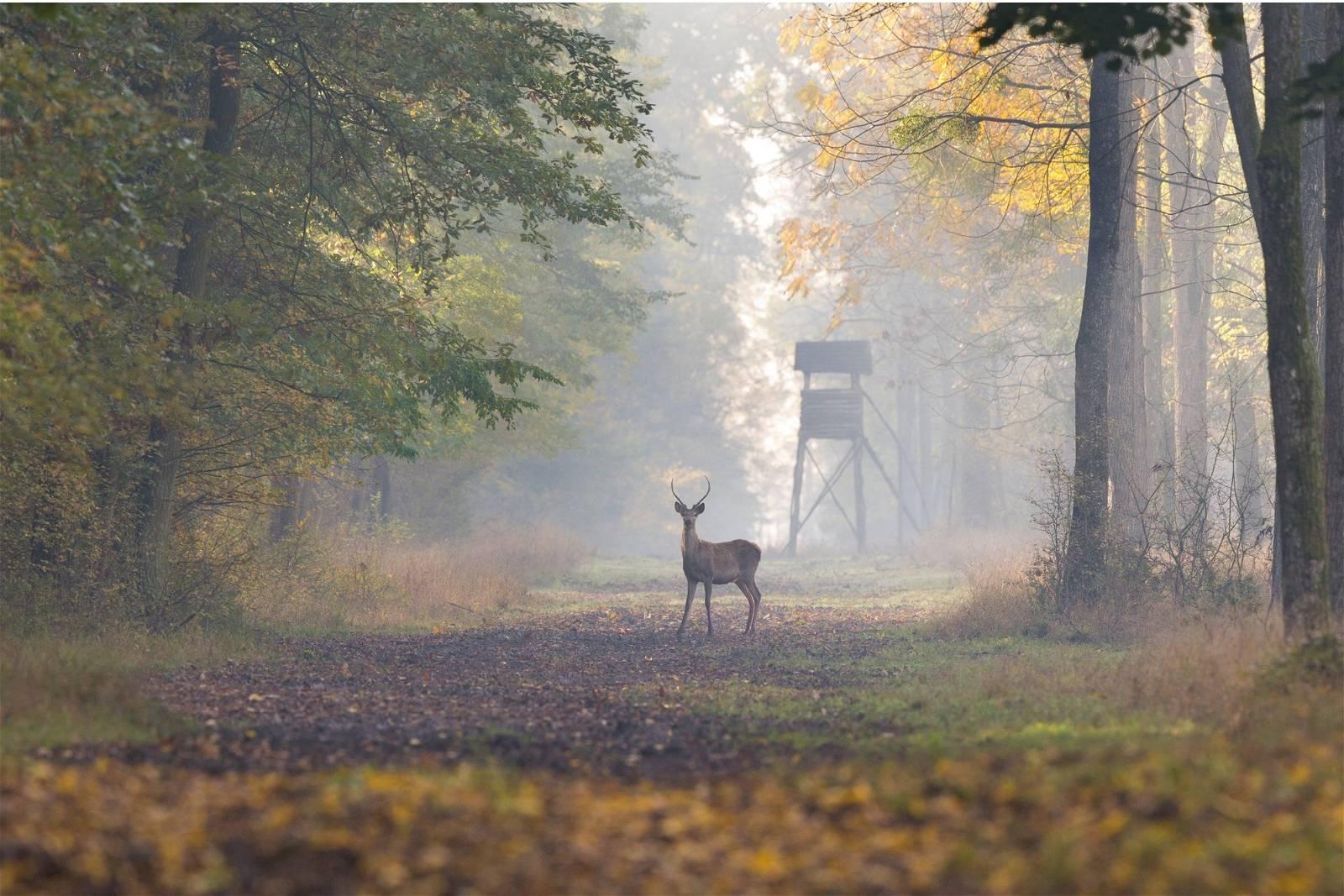 Deer Hunting 101: A Beginner's Guide