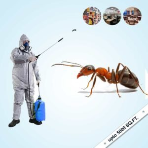 Ant Control in House